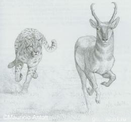 http://www.gepard.org/picts/Anc_tr_hunt.jpg