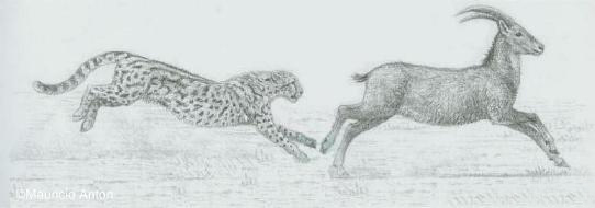 http://www.gepard.org/picts/anc_hunt10s1.jpg