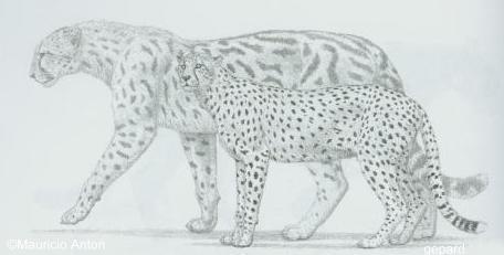 http://www.gepard.org/picts/ans_pard.jpg