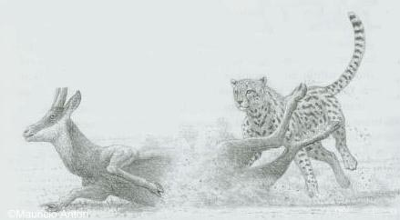 http://www.gepard.org/picts/ant_hunt.jpg